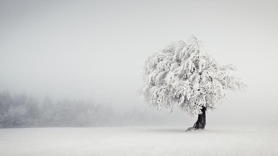 Snow Photograph - Silence by Andreas Wonisch