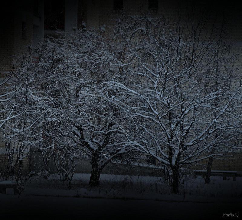 Nature Photograph - Silent Night by Marija Djedovic