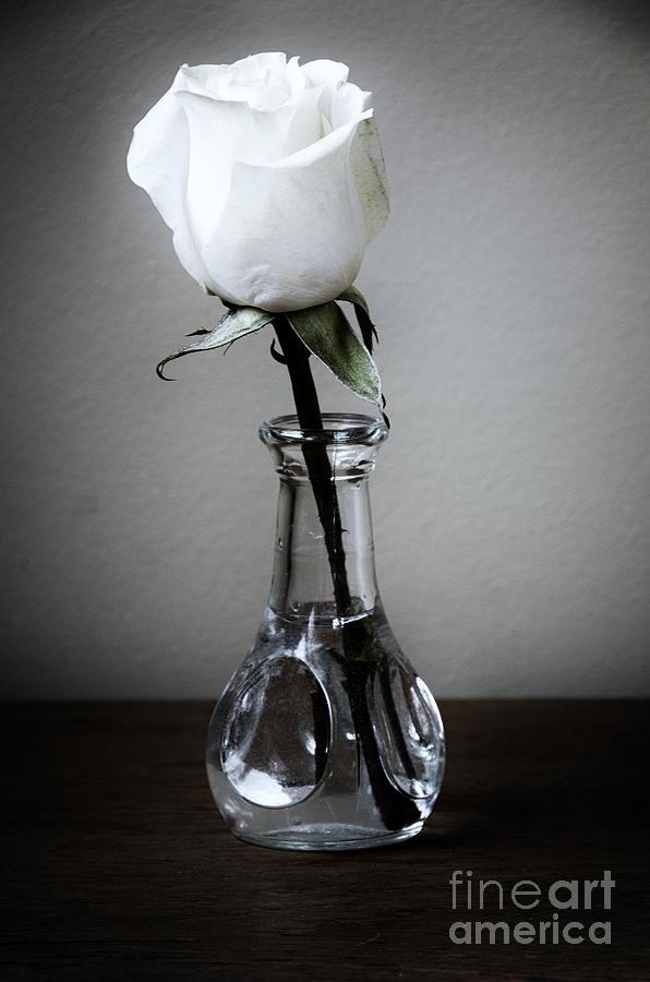 Single White Rose In Vase Photograph By Birgit Tyrrell