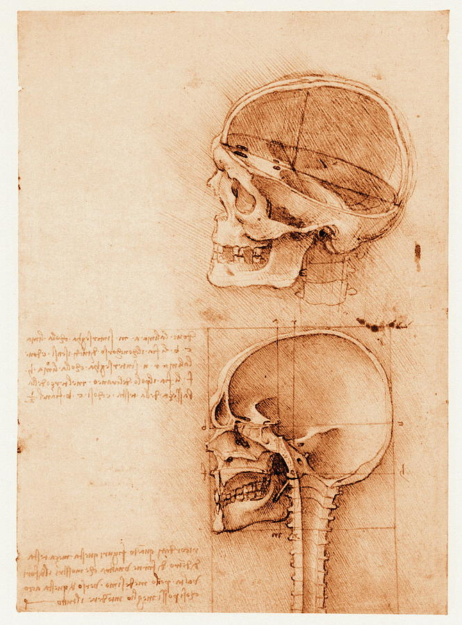 Leonardo Da Vinci Photograph - Skull Anatomy by Mehau Kulyk