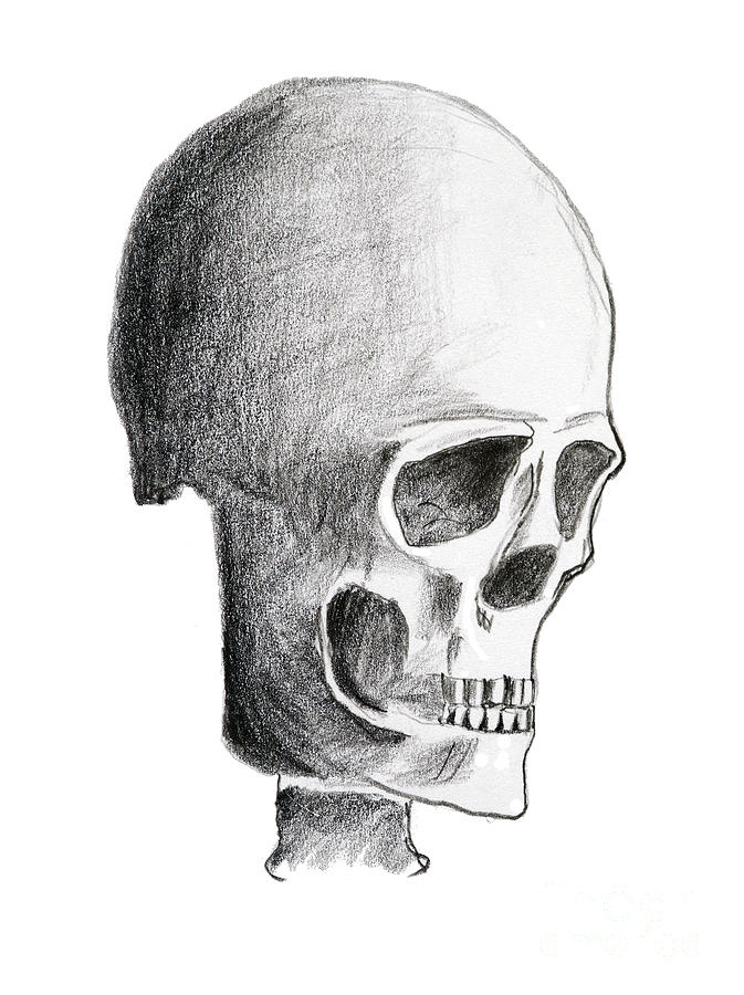 Halloween Drawing - Skull by Michal Boubin
