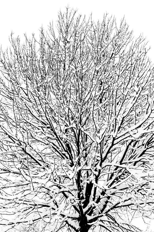 B&w Photograph - Snow Cover by Gaurav Singh