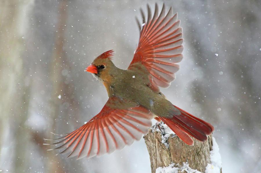Nature Photograph - Snow Storm by Mircea Costina