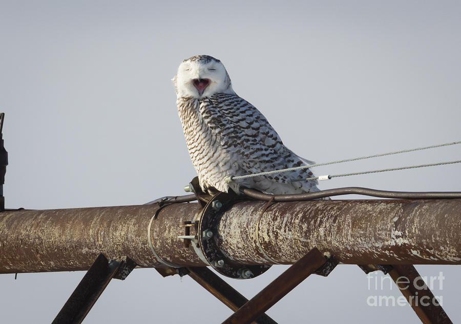 Canon Photograph - Snowy Owl In Kenosha by Ricky L Jones