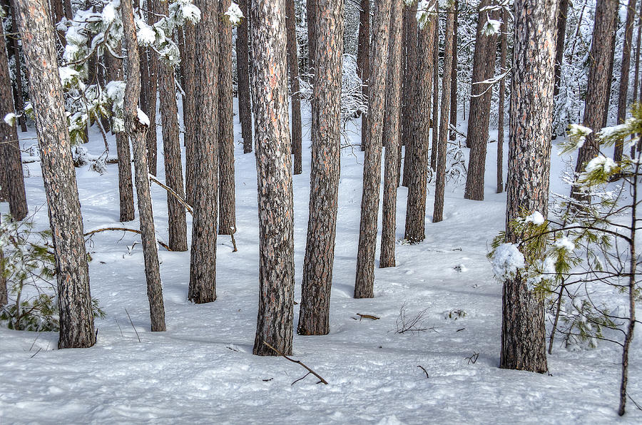 Snow Photograph - Snowy Woods by Donna Doherty