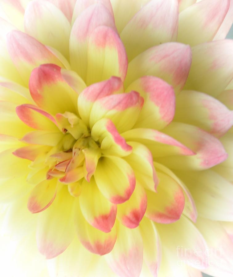 Softness Photograph - Softness by Kathleen Struckle