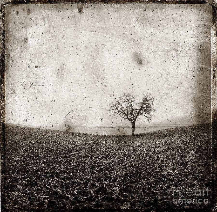 Textured Photograph - Solitary Tree In Limagne Landscape. Auvergne. France by Bernard Jaubert