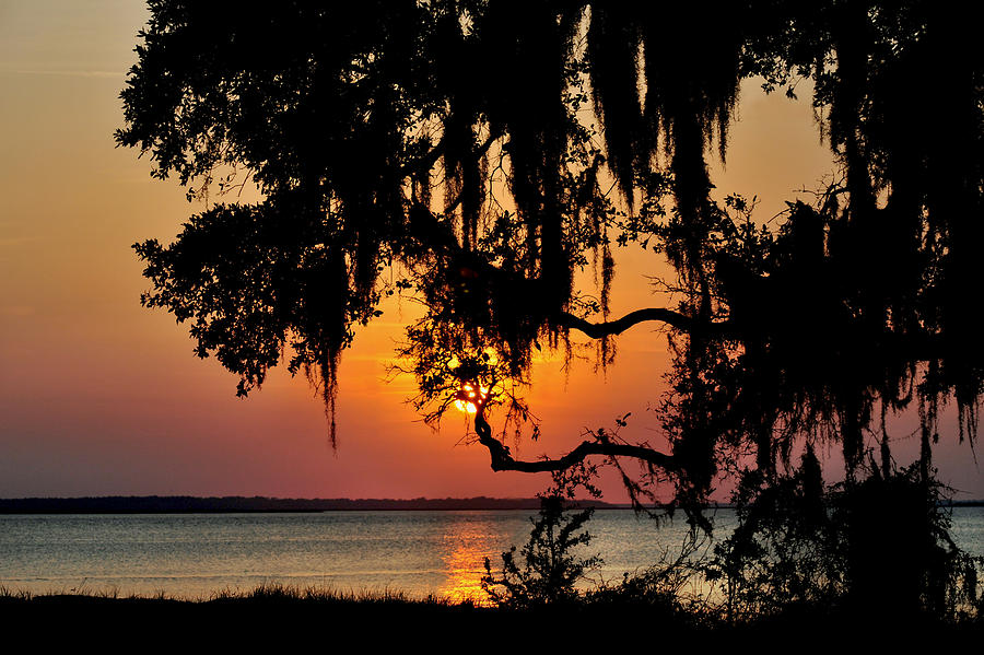 Spanish moss sunset by Peter DeFina