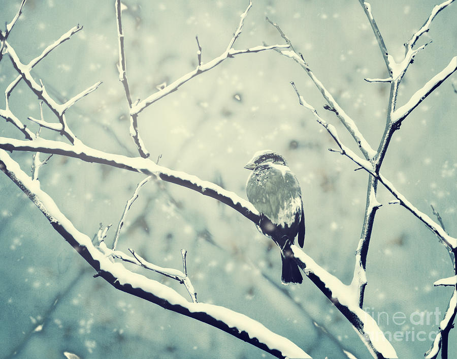 Winter Digital Art - Sparrow On The Snowy Branch by Jelena Jovanovic