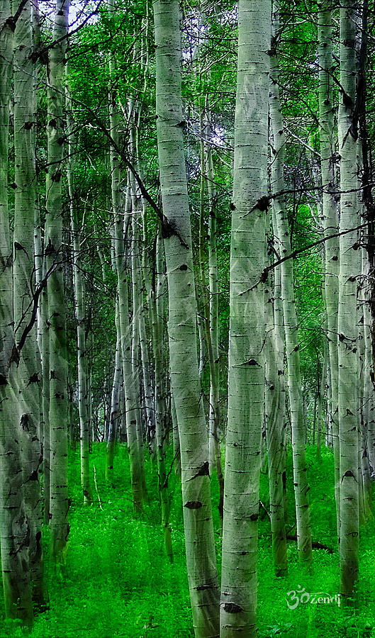 Spectacular Aspens Photograph by Cindy Greenstein