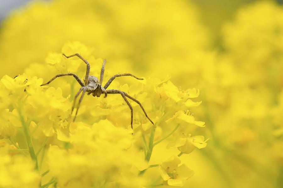 Spider Photograph - Spider by Jaroslaw Grudzinski