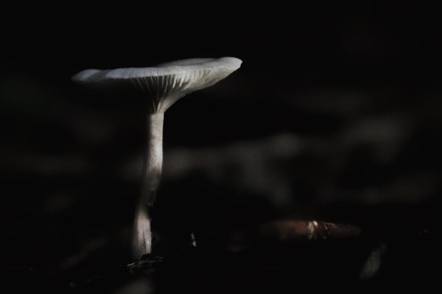 Mushroom Photograph - Spirit Rising by Odd Jeppesen