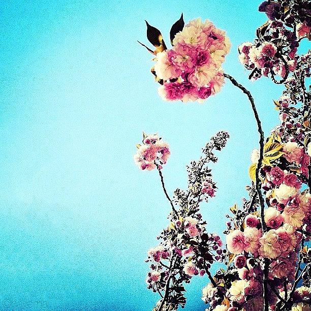 Beautiful Photograph - Spring Blossoms by Natasha Marco