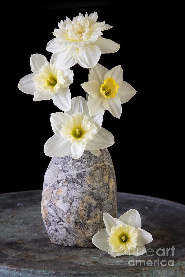 Fresh Photograph - Spring Daffodils by Edward Fielding
