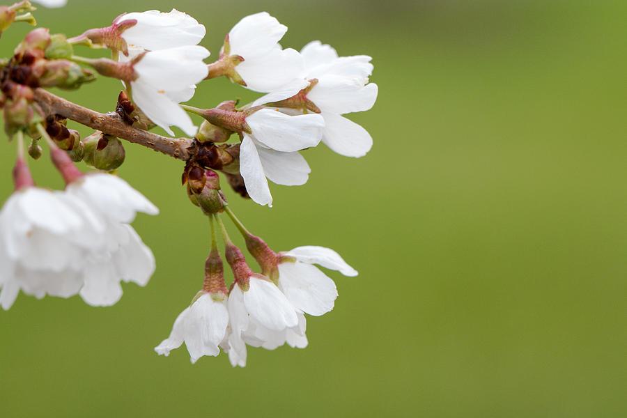 Bloom Photograph - Spring Flowers by Gaurav Singh