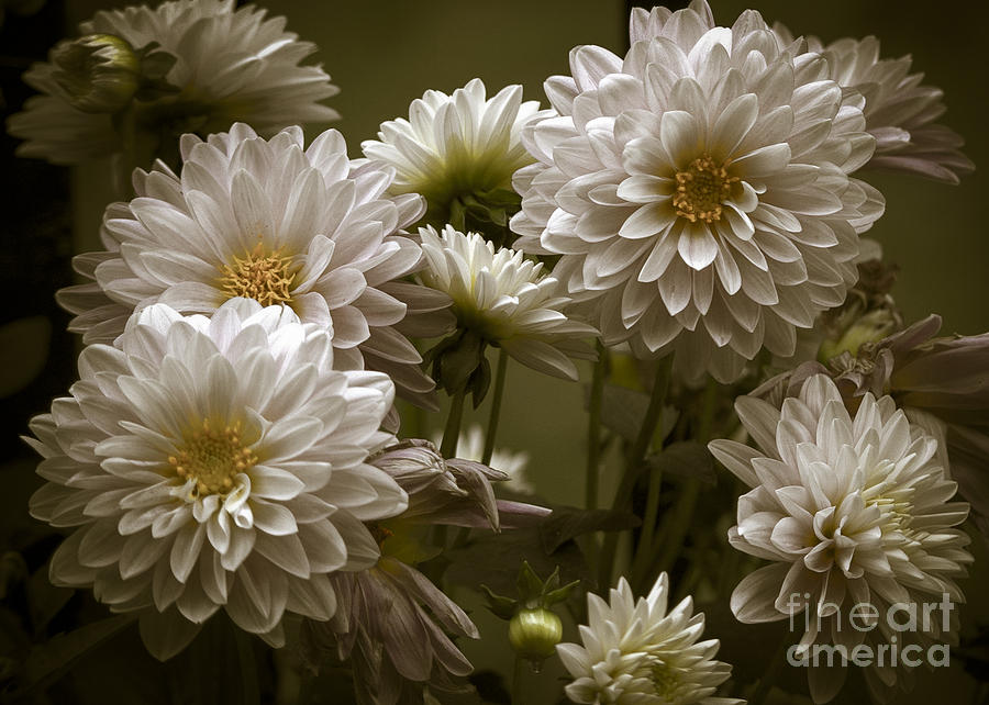 Flowers Photograph - Spring Flowers by Joe McCormack Jr
