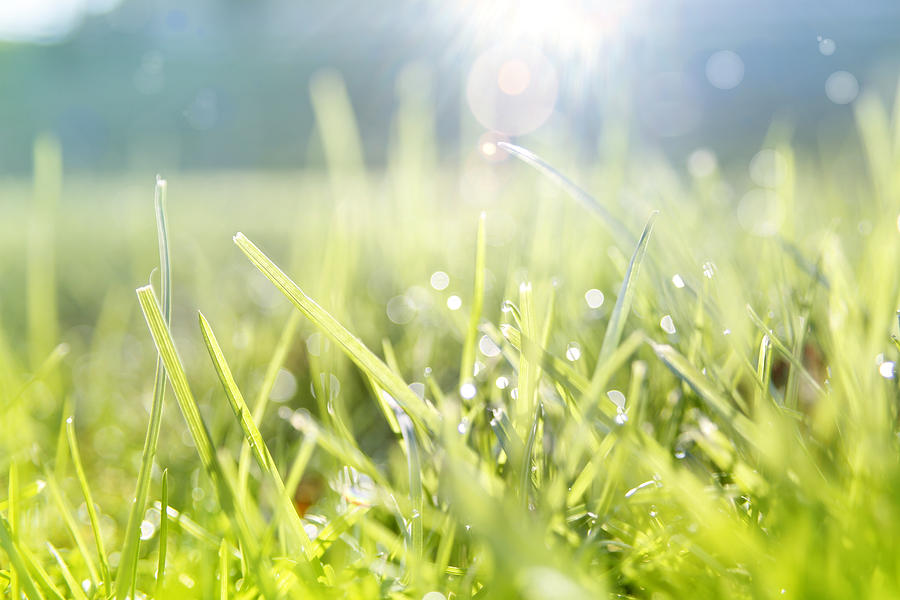 Grass Photograph - Spring by Les Cunliffe