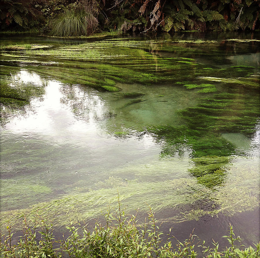 Marsh Photograph - Spring Water by Les Cunliffe