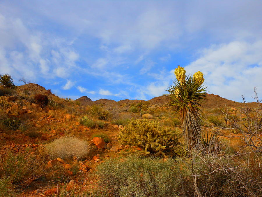 Landscape Photograph - Springtime In Arizona by James Welch