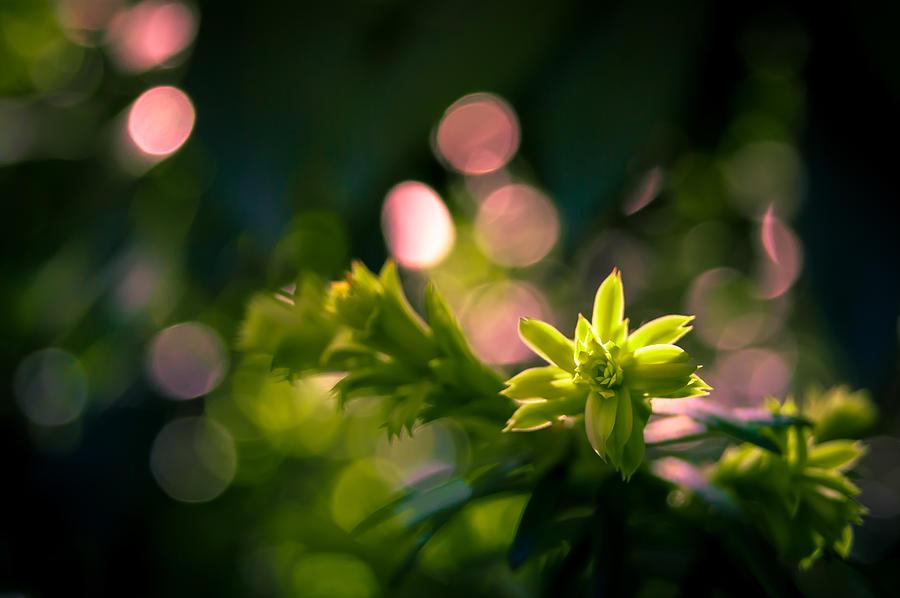 Sprout On Fire by Jen Baptist