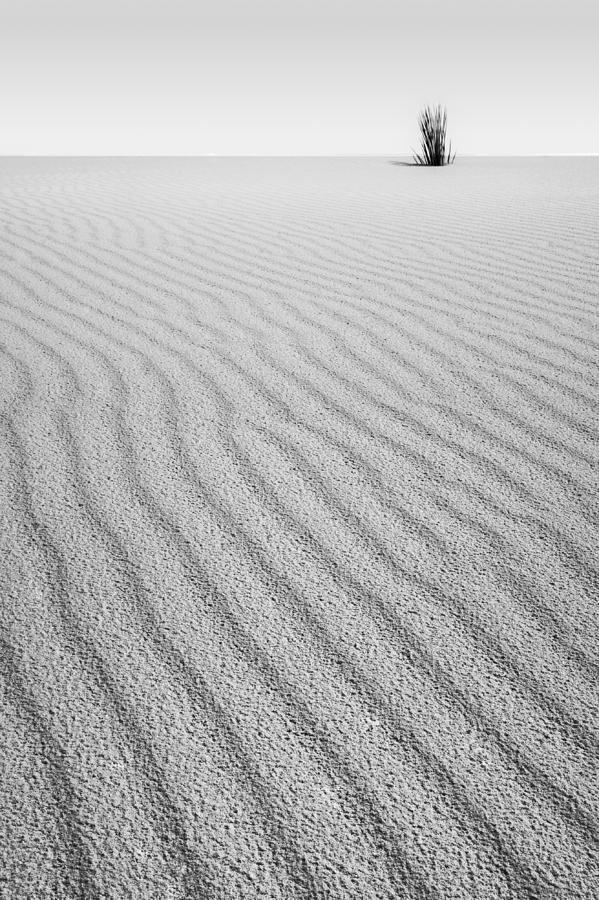 Landscape Photograph - Sprout by Ryan Heffron