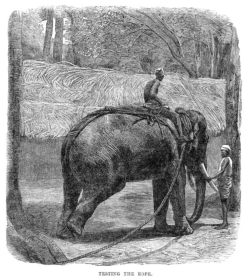 Painting Sri Lankan Elephant Art