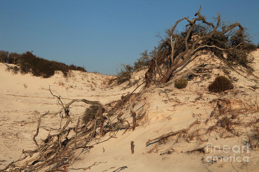 St Joseph Peninsula State Park Photograph - St Joseph Sand Dunes by Adam Jewell