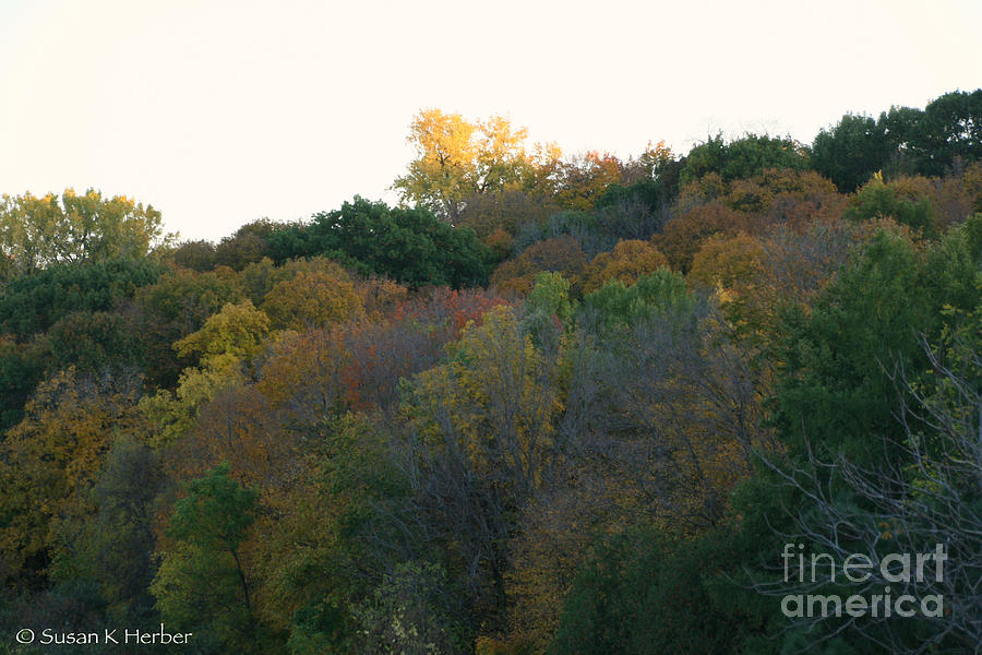 Tree Photograph - Stand Above by Susan Herber