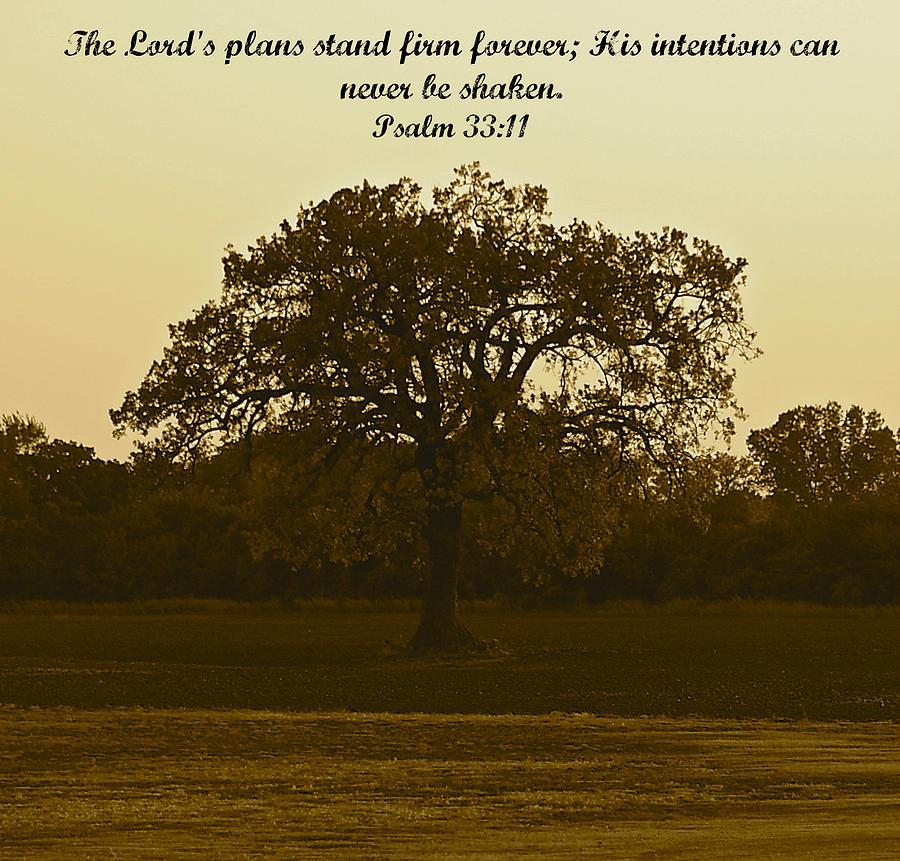 Psalm Photograph - Stand Firm by Roseann Errigo