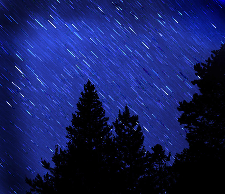 Tree Photograph - Star Trails In Night Sky by Lane Erickson