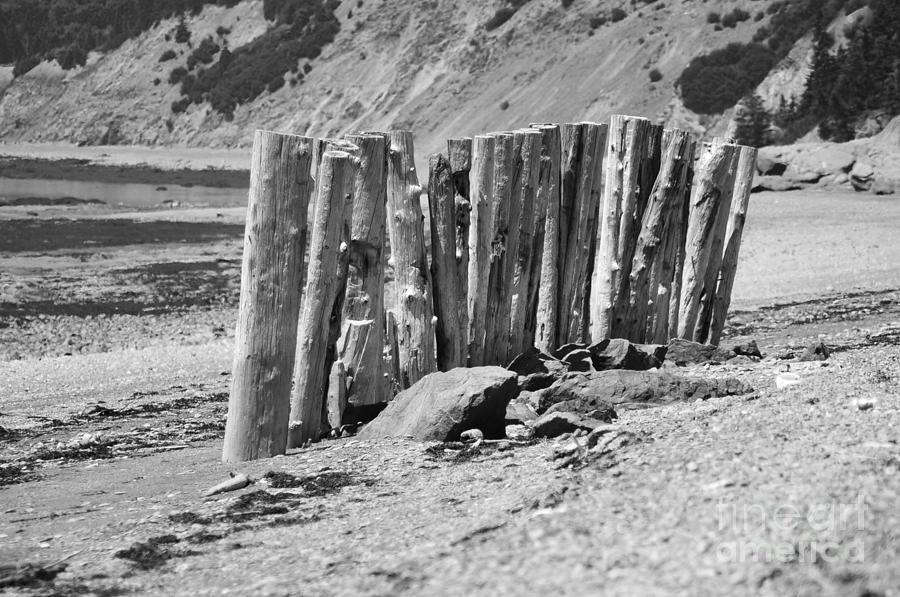 Beach Photograph - Stick Together by Randi Grace Nilsberg