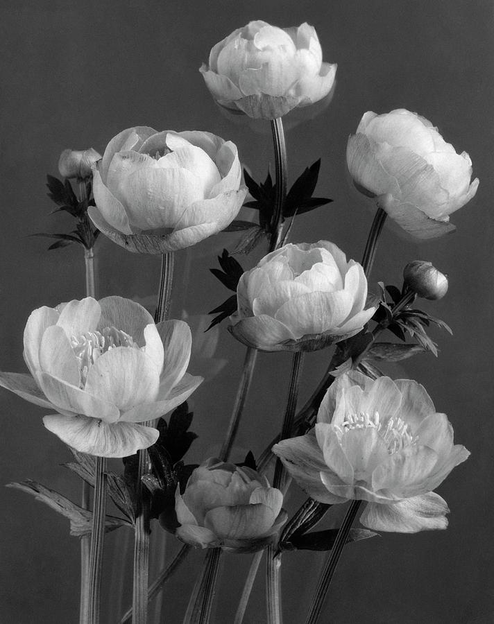 Still Life Of Flowers Photograph by J. Horace McFarland