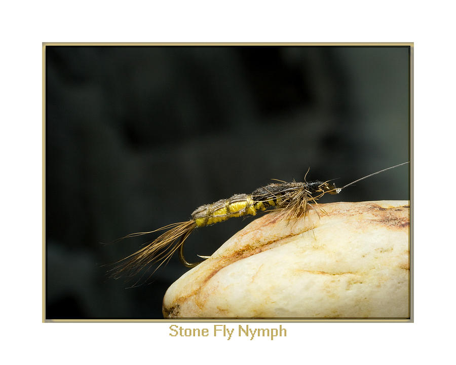 Outdoors Photograph - Stone Fly Nymph by Neal Blizzard