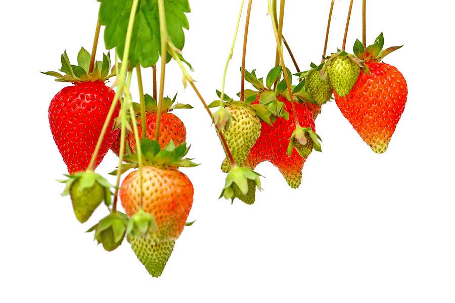 Strawberry Photograph - Strawberries by Borislav Marinic