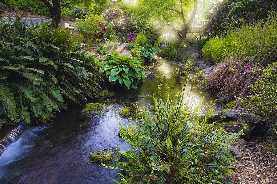 Stream at crystal springs rhododendron garden photograph by jit lim for Crystal springs rhododendron garden