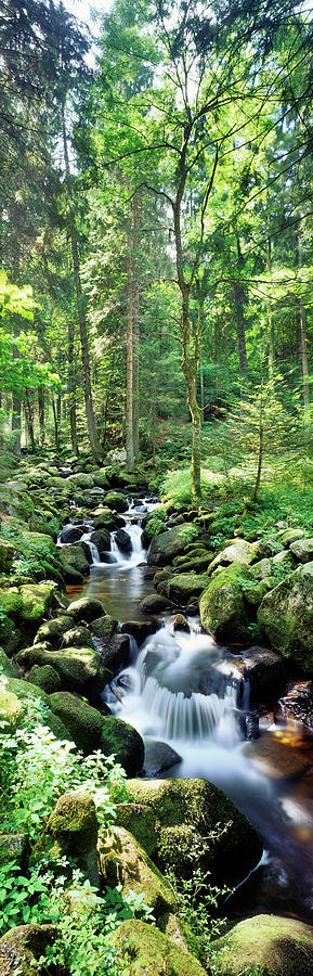 Vertical Photograph - Stream Flowing Through A Forest, Usa by Panoramic Images