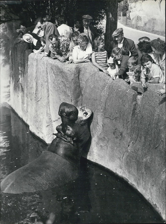 Retro Photograph - Summer Snaps At The Zoo by Retro Images Archive