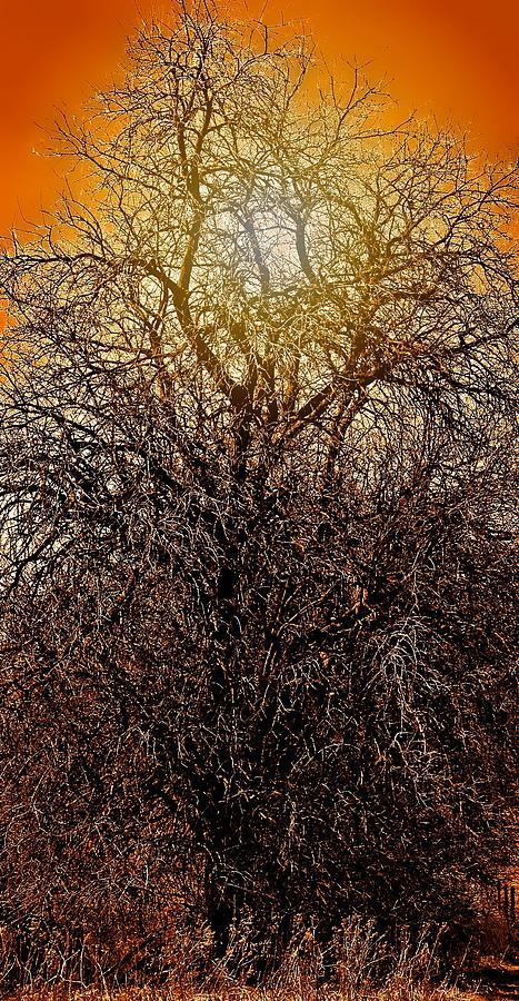 Tree Photograph - Sunburst Tree  by Candice Trimble