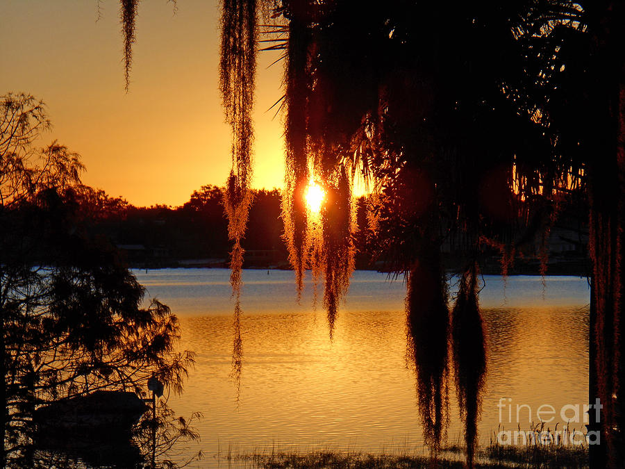 Sunrise on Lake Weir - 2 by Tom Doud
