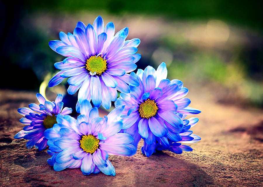Blue & Purple Flowers Photograph - Sunset Flowers by Tammy Smith