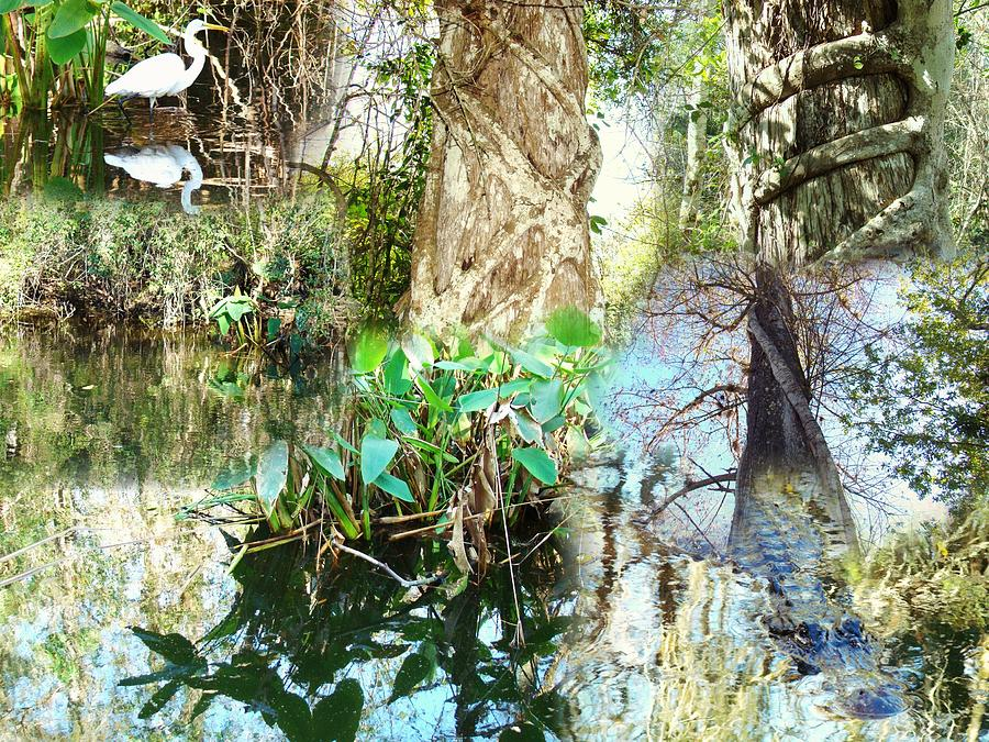 Swamp People Photograph - Swamp Life by Van Ness
