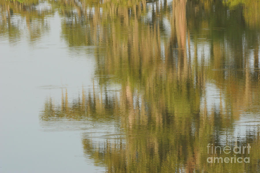 Spanish Moss Photograph - Swamp Reflections by Kelly Morvant