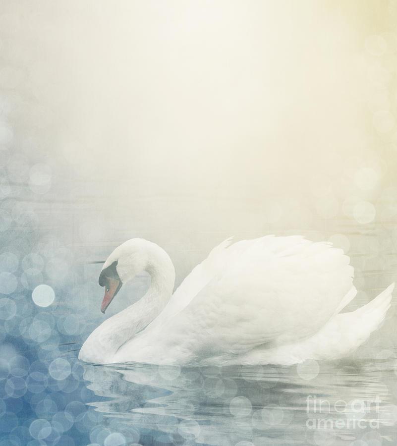 Nature Pyrography - Swan by Jelena Jovanovic