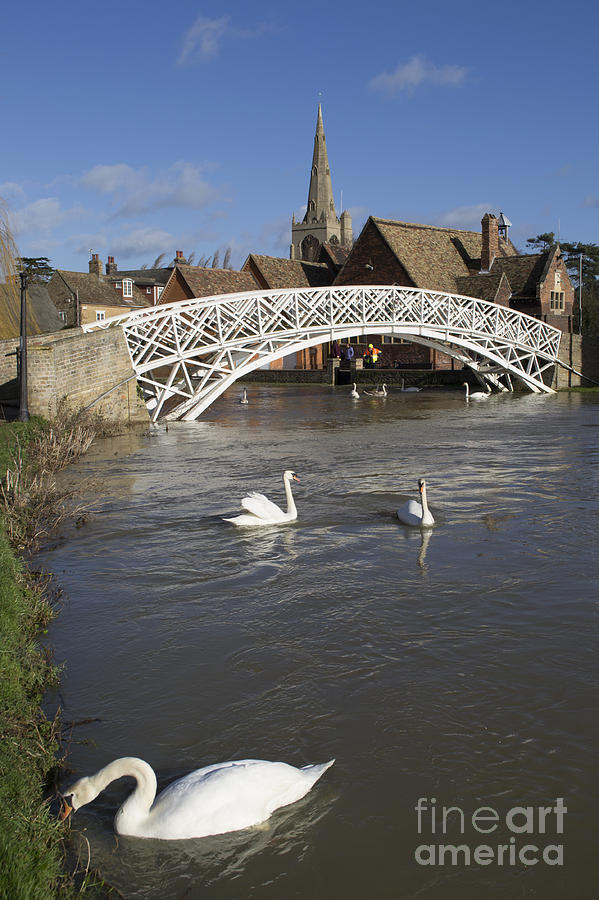 Swans At The Chinese Bridge Photograph by Keith Douglas