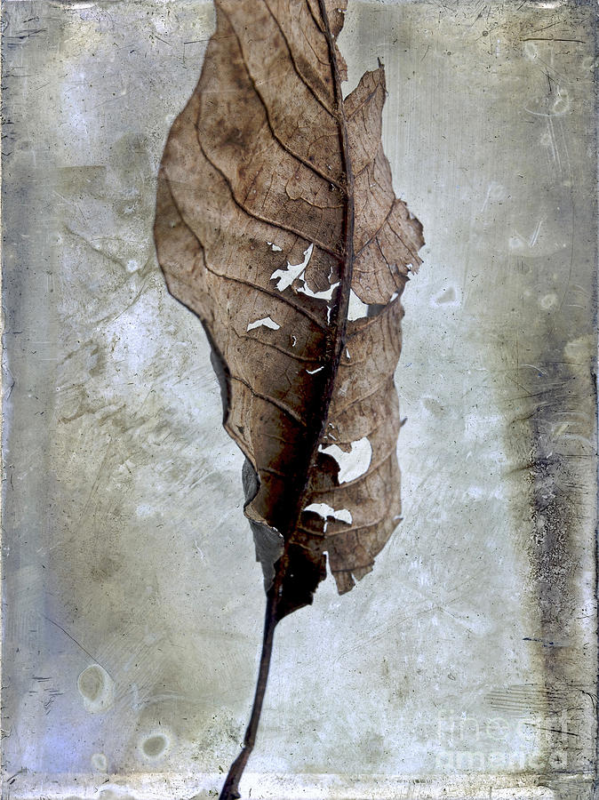 Cut Out Photograph - Textured Leaf by Bernard Jaubert