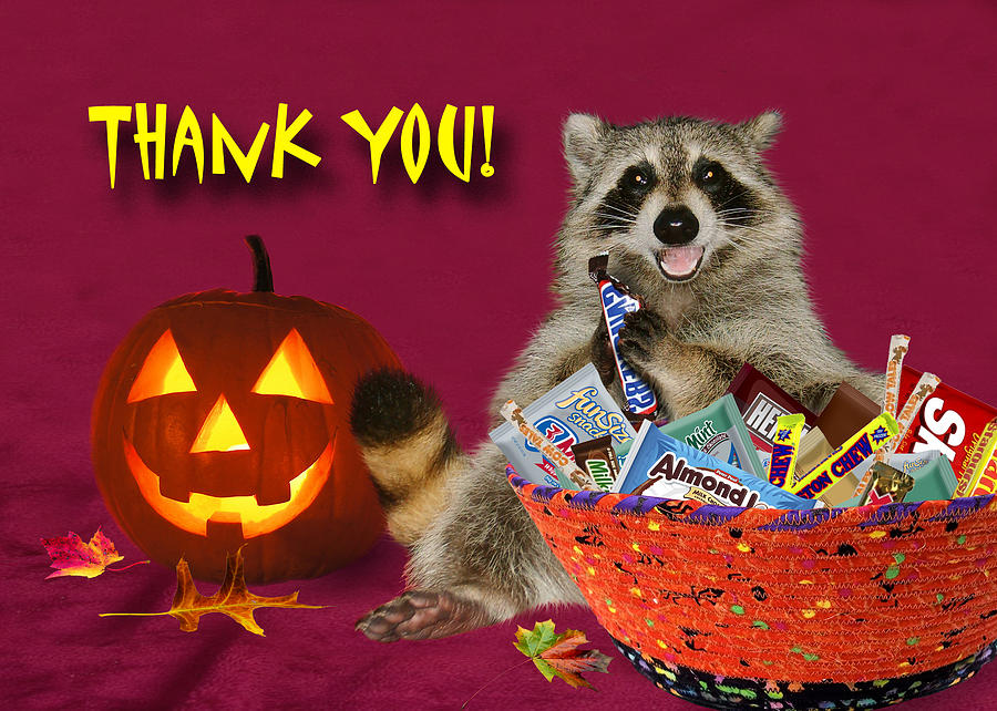 Thank You Halloween Raccoon Photograph by Jeanette K