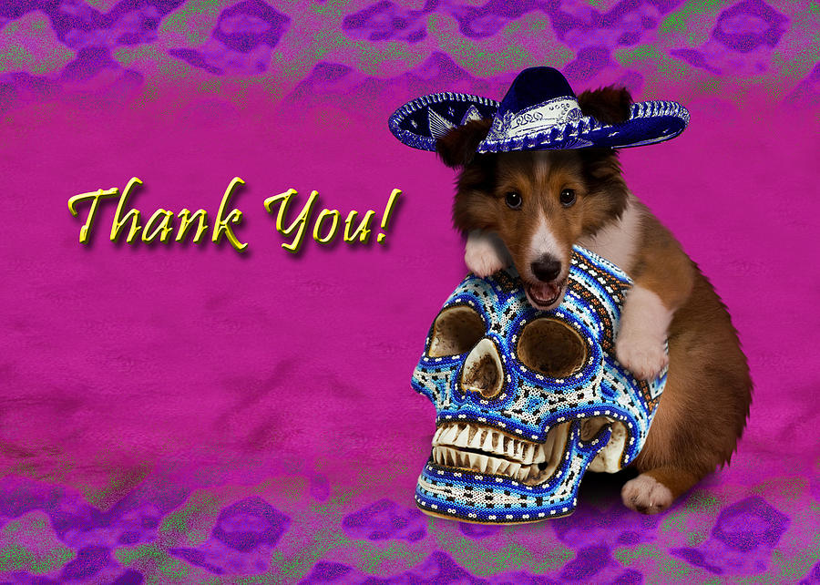 Thank You Photograph - Thank You Sheltie Puppy by Jeanette K