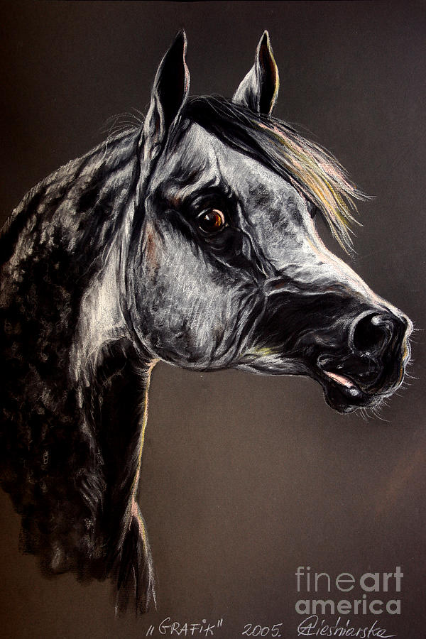 Horse Drawing - The Arabian Horse by Angel  Tarantella
