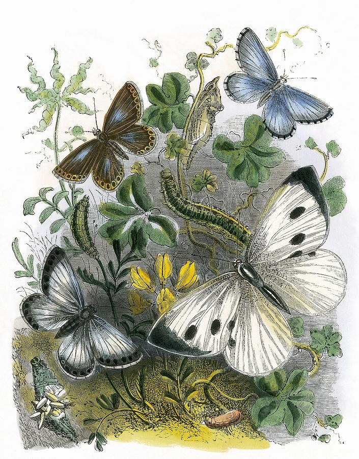 Butterflies Painting - The Butterfly Vivarium by English School