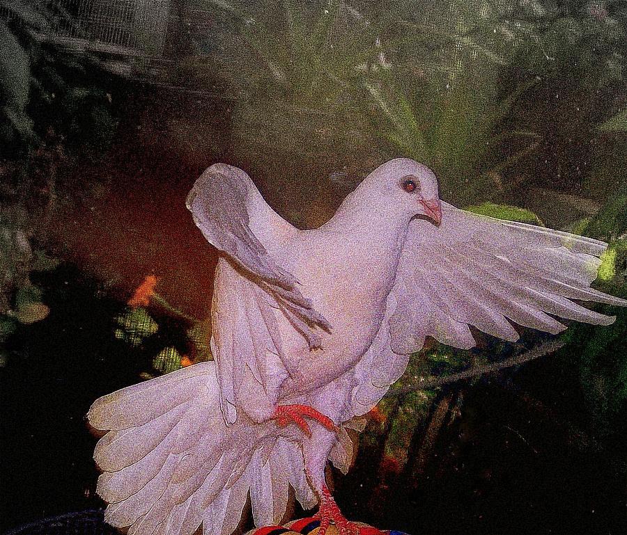 Dove Mixed Media - The Dance by YoMamaBird Rhonda